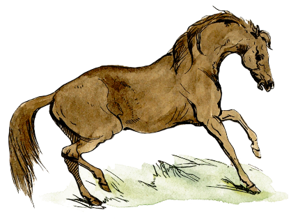 Free Arabian Horse Clipart, 1 page of Public Domain Clip Art.