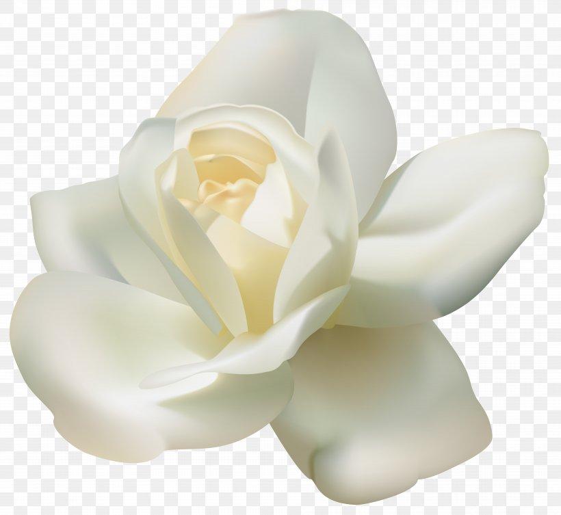Arabian Jasmine Tea Clip Art, PNG, 7799x7162px, Rose, Black.