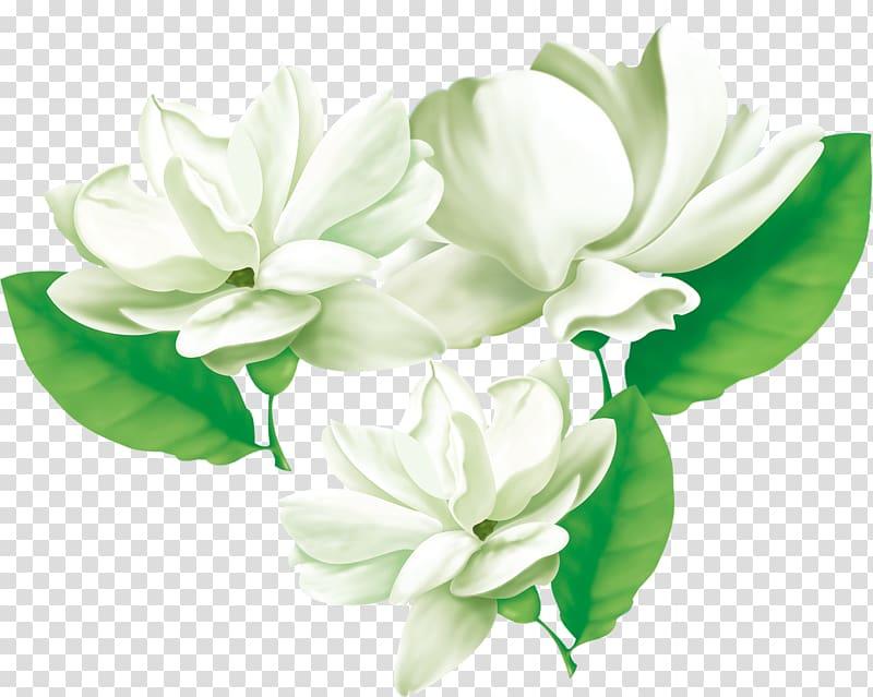 Arabian jasmine Flower Cape jasmine, Three jasmine, three.