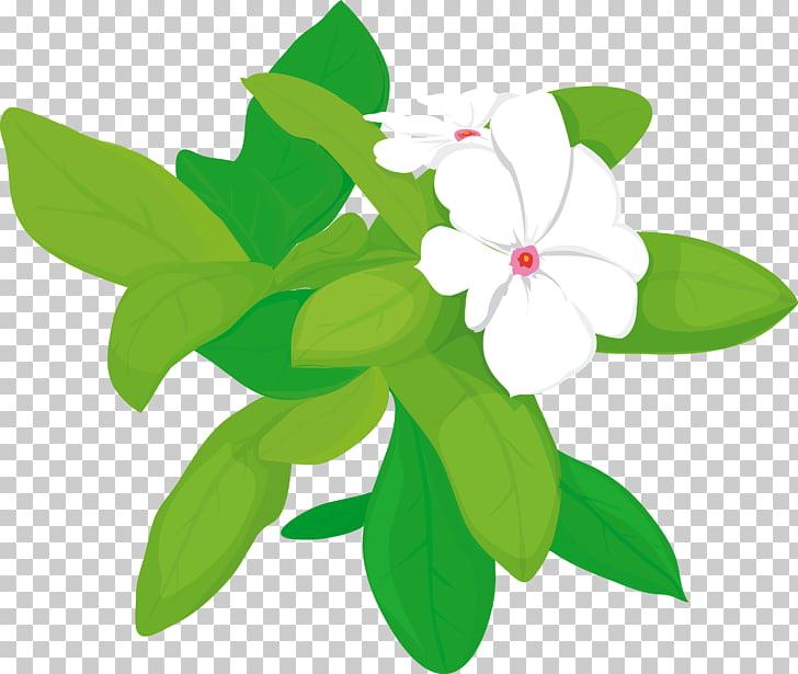 Princess Jasmine Arabian jasmine Flower, jasmine PNG clipart.