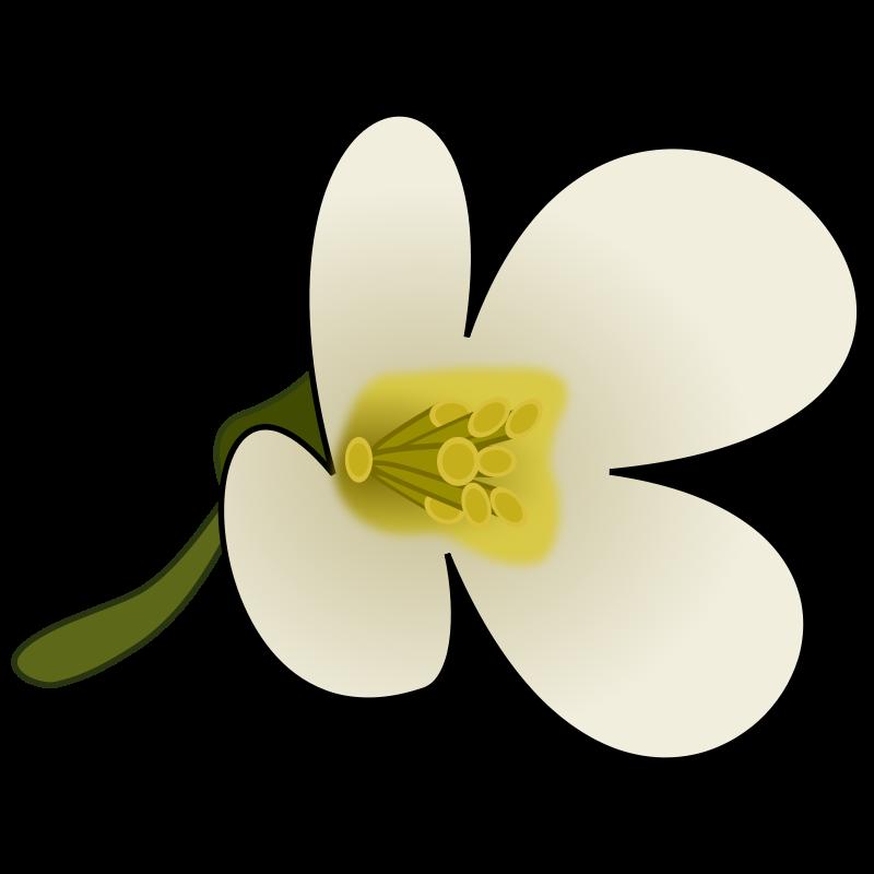 Free Clipart: Thaliana Flower.