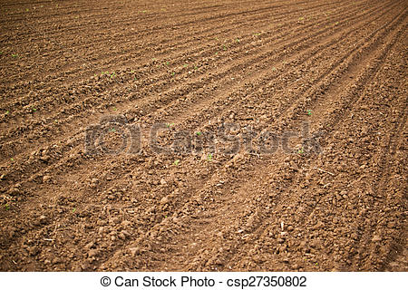 Stock Illustration of Agricultural field, Arable land soil in the.