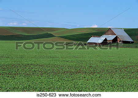 Stock Photo of Barn on arable farm is250.
