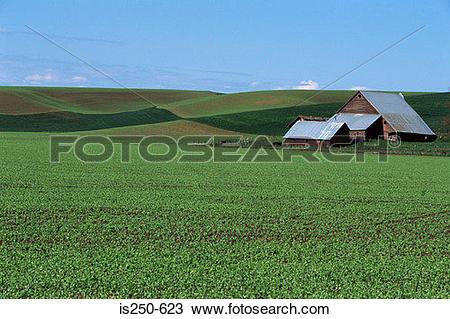 Stock Photo of Barn on arable farm is250.