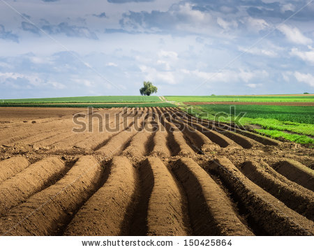 Arable Land Stock Photos, Royalty.