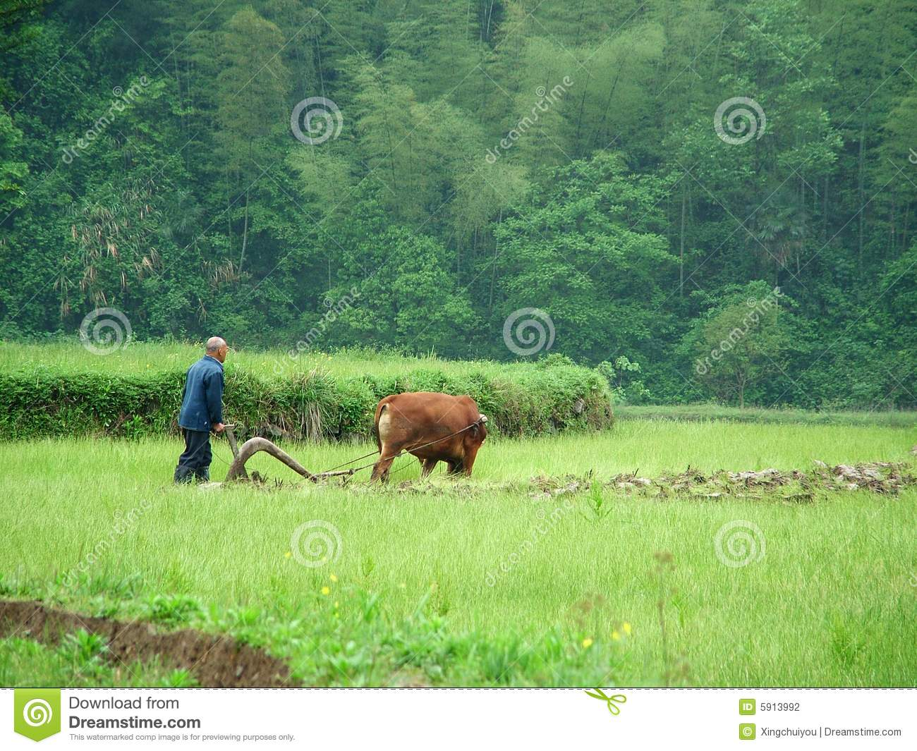 Labor Arable Land Stock Photography.