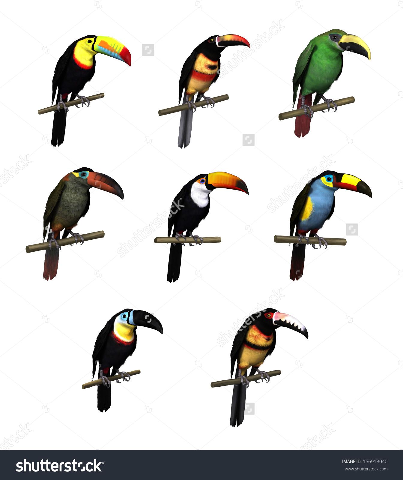 3d Render Toucan Species Keelbill Toucan Stock Illustration.