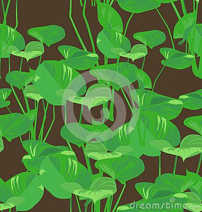 Araceae Stock Illustrations, Vectors, & Clipart.