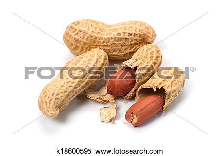 Stock Image of Peanut.