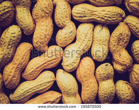 Peanut Dry Fruit Groundnut Arachis Hypogaea Stock Photo 68000077.