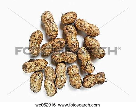 Stock Images of Arachis hypogaea is the scientific name for.