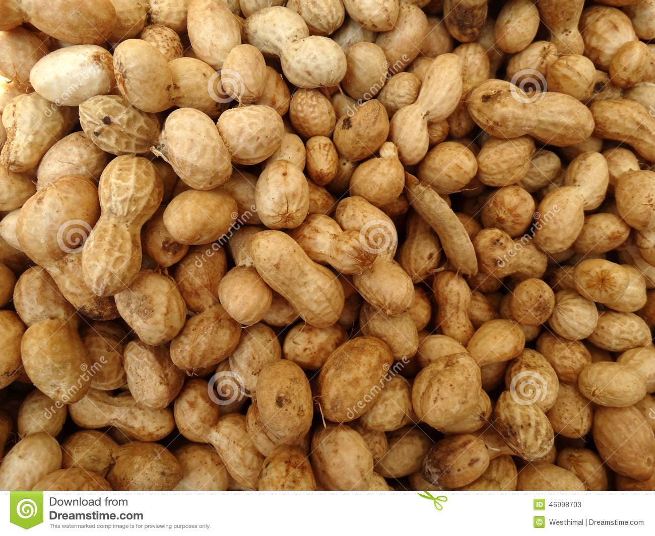 Groundnut, Peanut, Arachis Hypogaea Stock Photo.