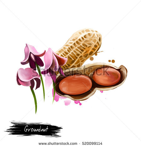 Groundnut Crop Stock Photos, Royalty.