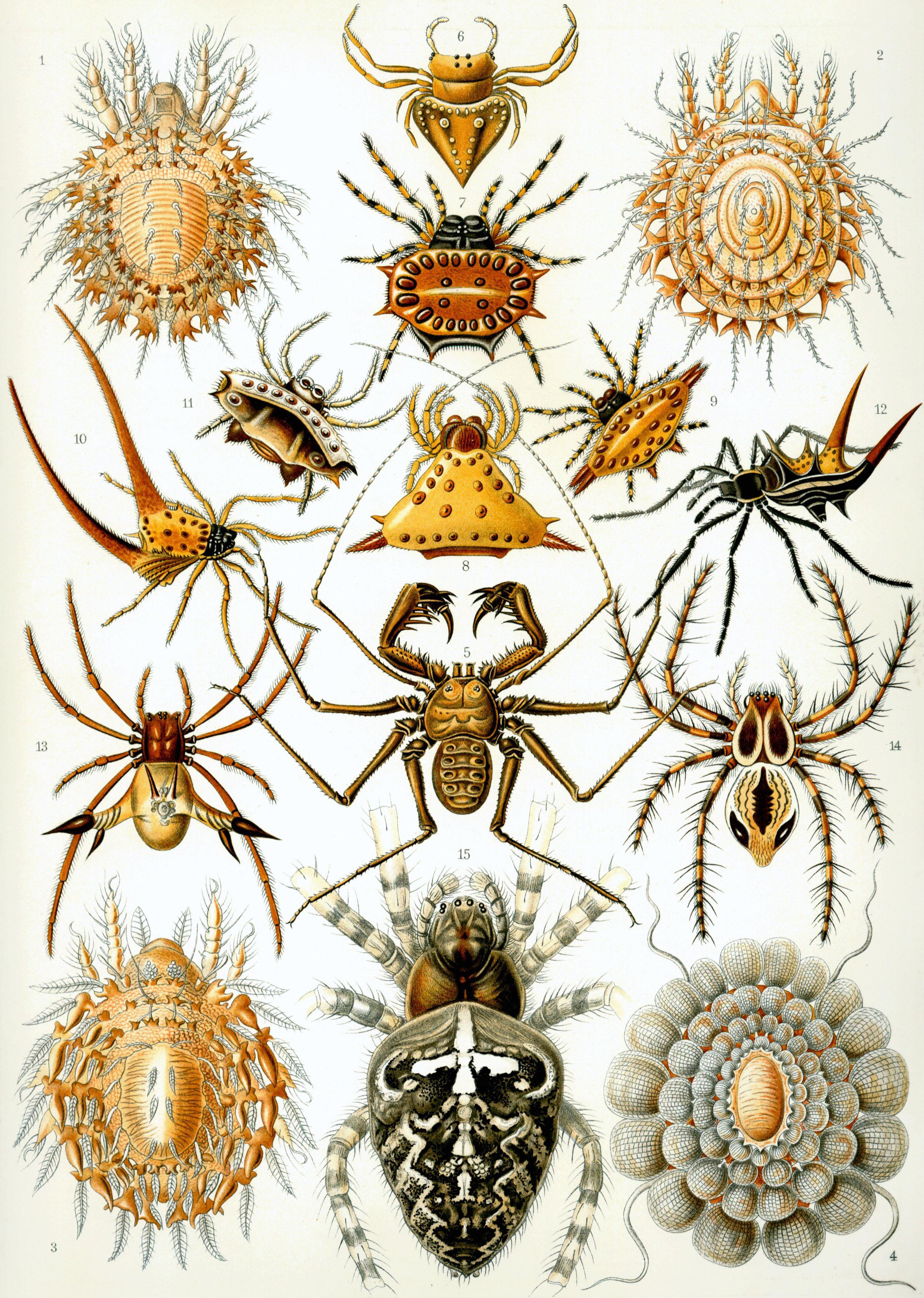 Arachnid.
