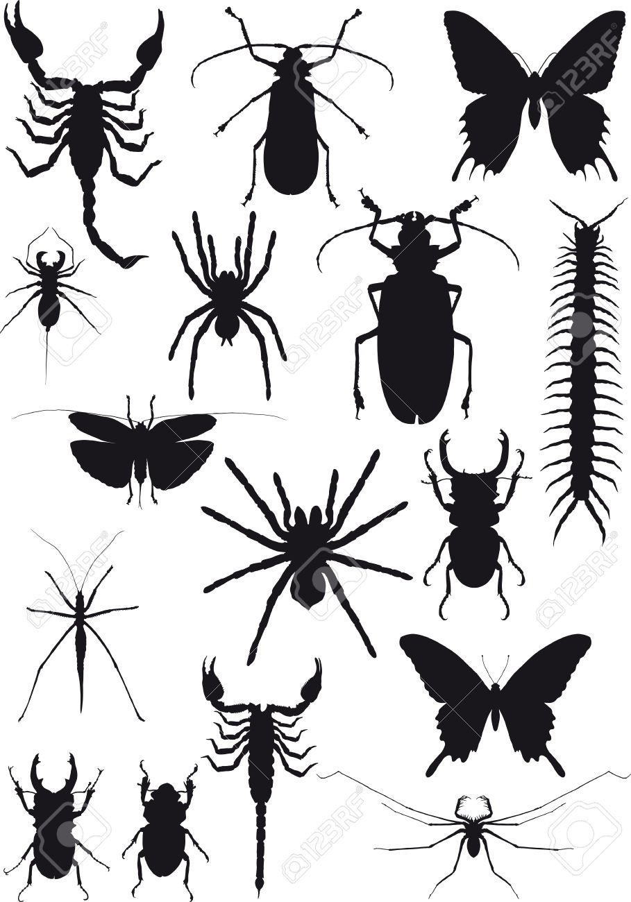 Sixteen Black Silhouette Of Exotic Insects And Arachnids Isolated.