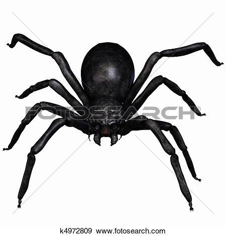 Arachnids Illustrations and Clip Art. 578 arachnids royalty free.