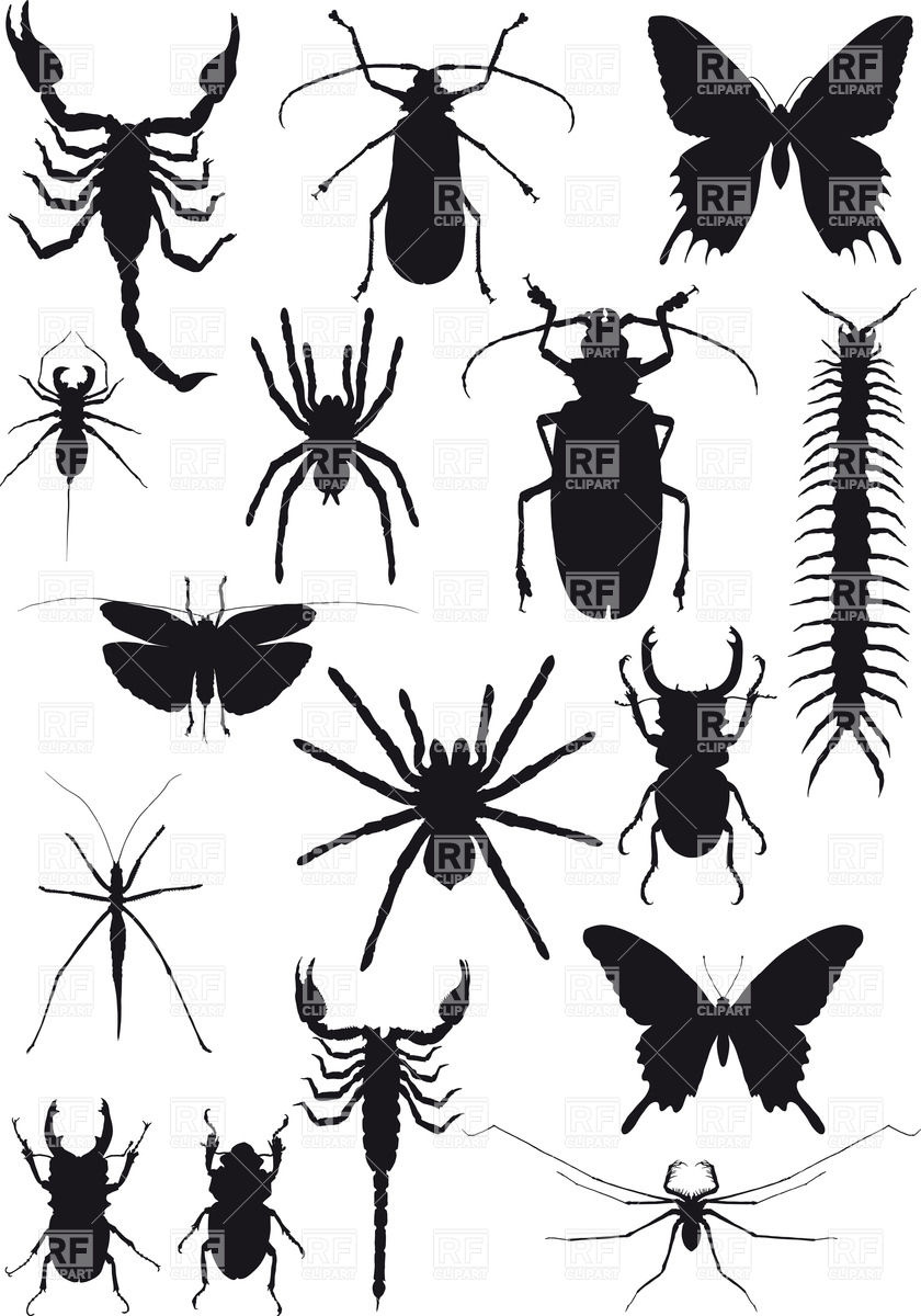 Silhouettes of exotic insects and arachnids Vector Image #38026.
