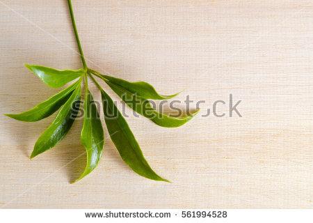 Araliaceae Stock Photos, Royalty.