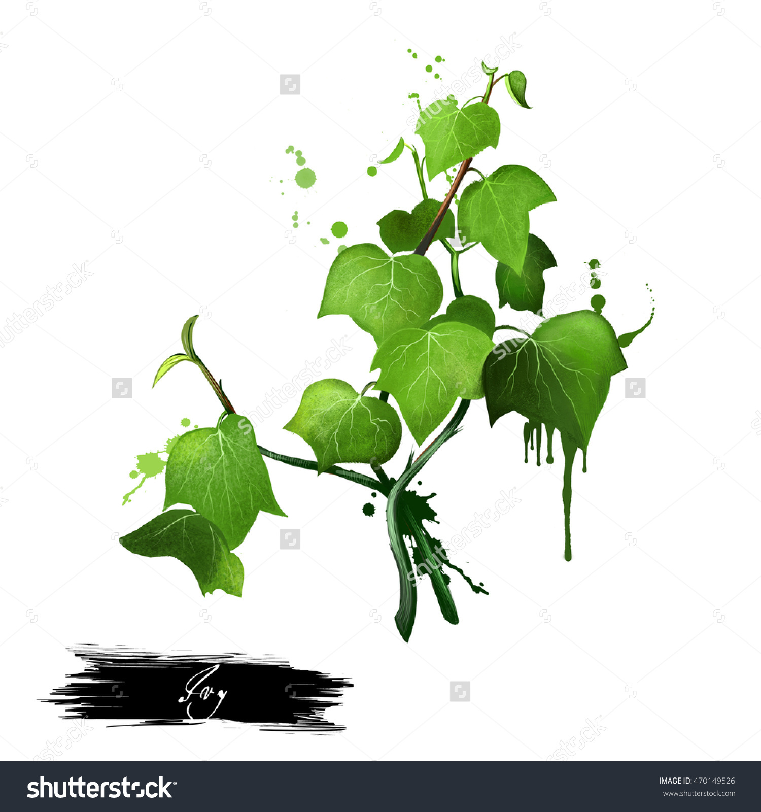 Green Ivy Sprig Isolated On White Background. Hand Drawn.