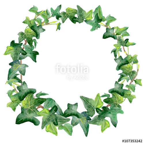 Watercolor drawing of green ivy wreath isolated on white.