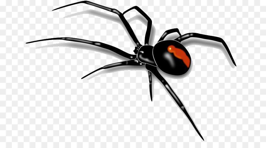Spider Black Widow png download.