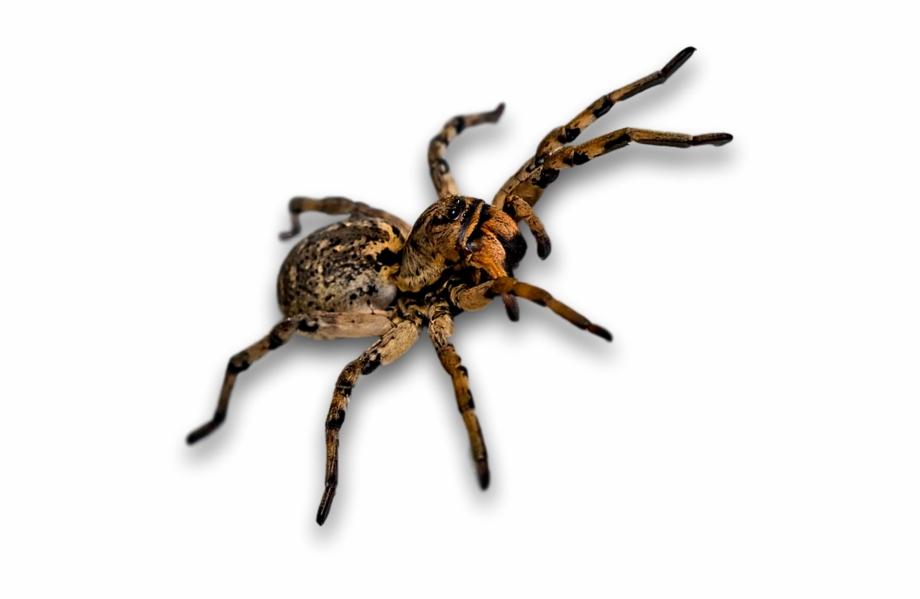 Araña, Escarabajo, Insecto, Insectos.