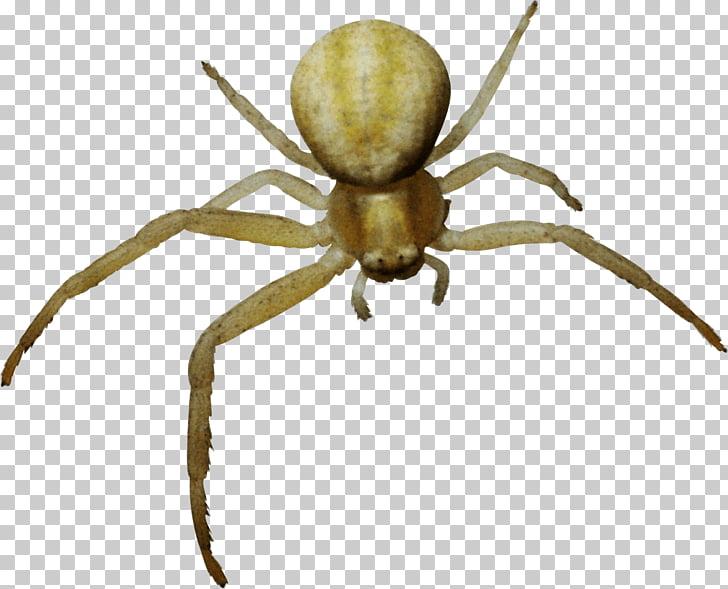 Tela de araña, araña PNG Clipart.