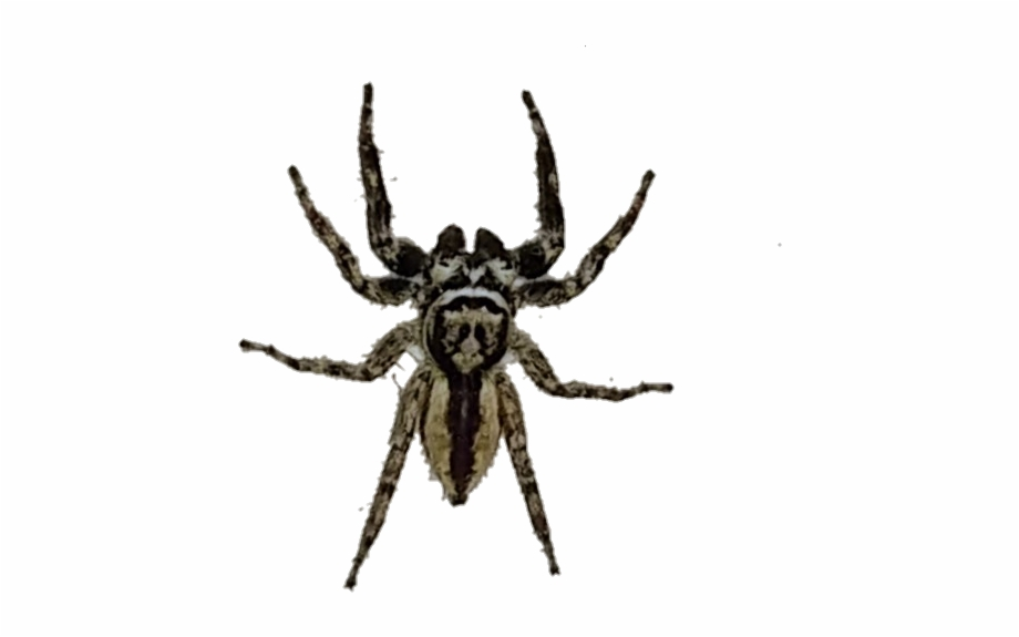 spider #spiders #araña #arañas.