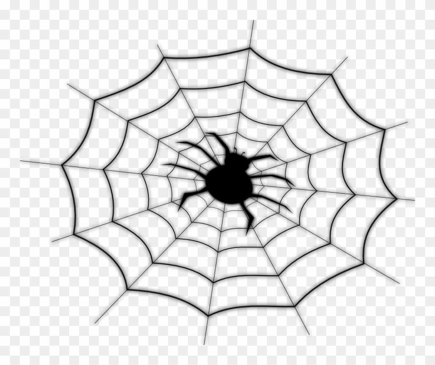 Spider On Spider Net.
