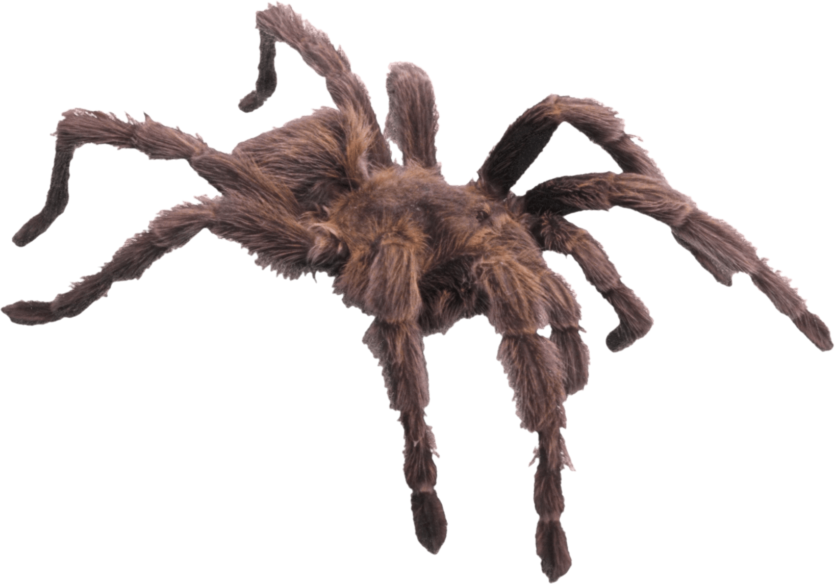 Hairy Brown Spider transparent PNG.