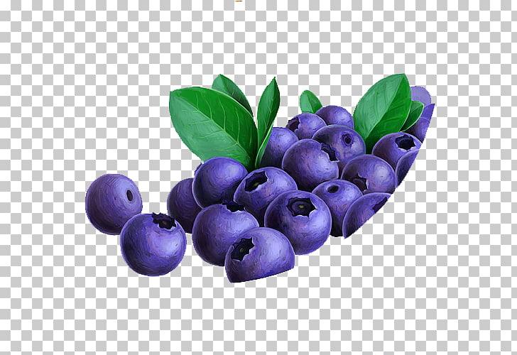Antocianidina lingonberry fruta arándano arándano, pilas.