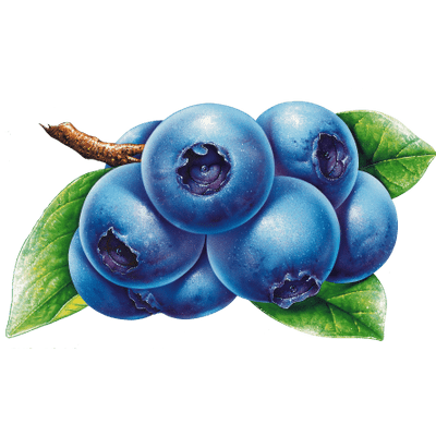 Blueberry Clipart transparent PNG.