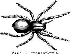 Araneae Clip Art EPS Images. 20 araneae clipart vector.