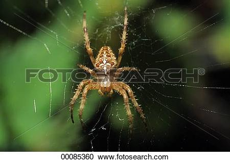 Stock Photography of cobwebs, Juniors, cobweb, animals, animal.