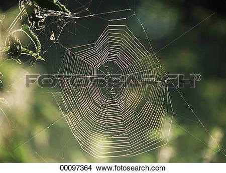 Stock Photo of back light, Juniors, back, animals, animal, Araneae.