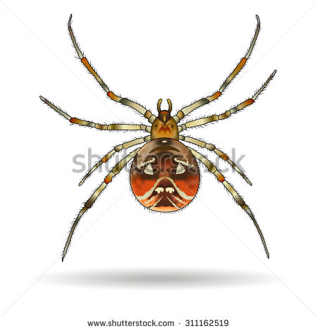 Araneae Stock Vectors & Vector Clip Art.