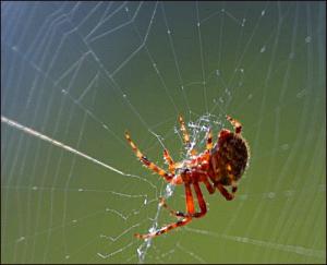 Spider Clip Art Download.