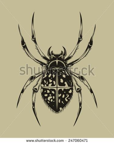 Araneus Stock Vectors & Vector Clip Art.