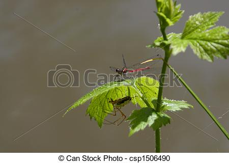 Stock Photography of the European garden spider (Araneus.