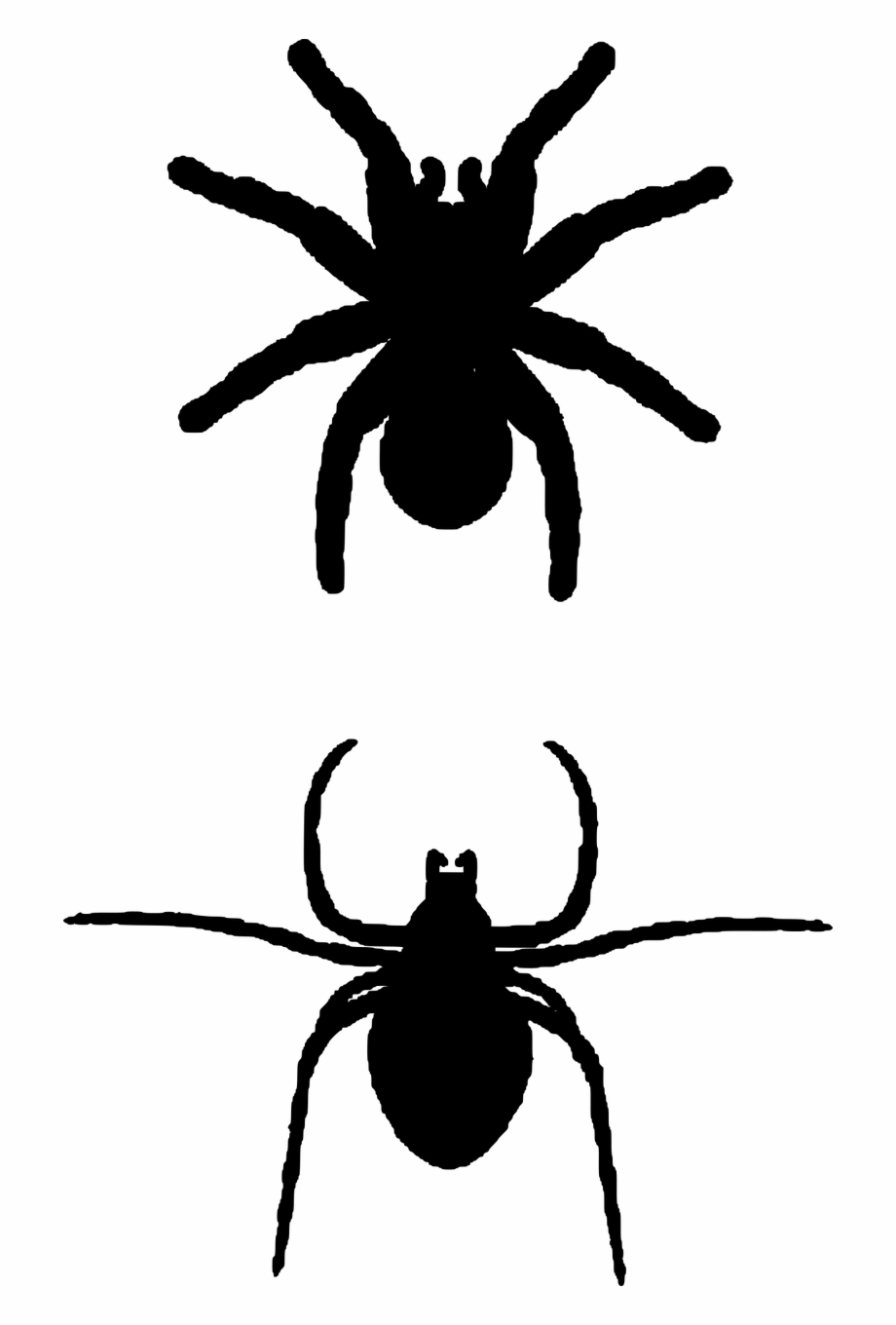 Spider Insects Silhouette.