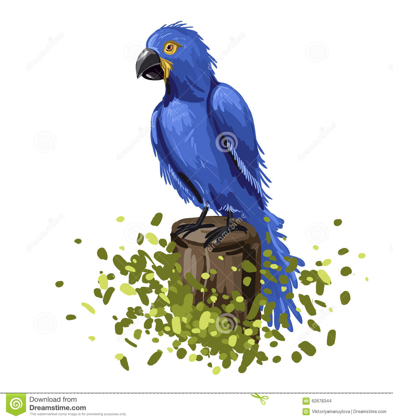 Color Drawing Macaw Stock Vector.