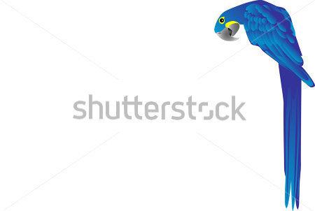 Hyacinth Macaw Clipart.
