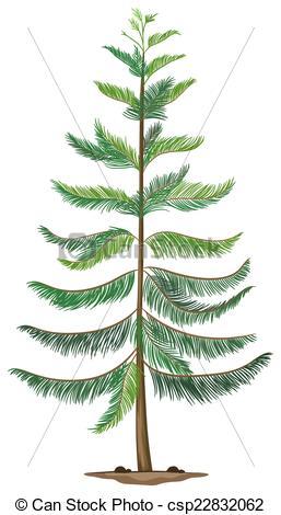 Clip Art Vector of A Norfolk island pine.
