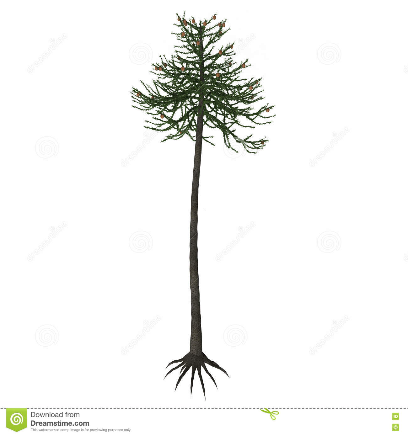 Branch Araucaria Tree Stock Photos, Images, & Pictures.