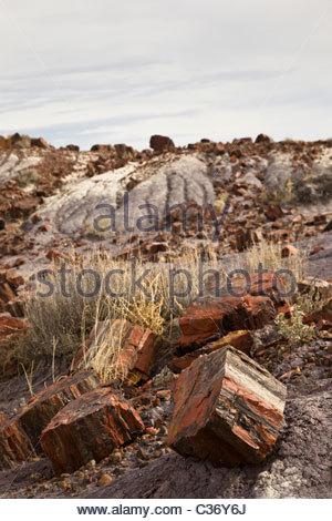Triassic Stock Photos & Triassic Stock Images.