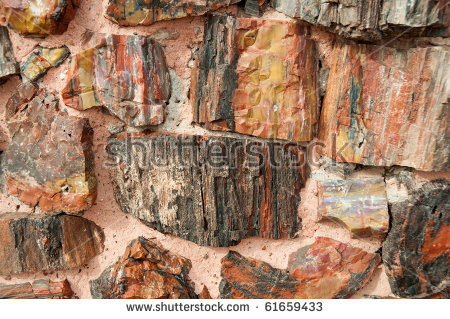 Agate House, Made Of Petrified Wood Stock Photo 61659433.