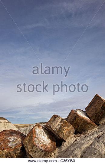 An Extinct Wood Stock Photos & An Extinct Wood Stock Images.