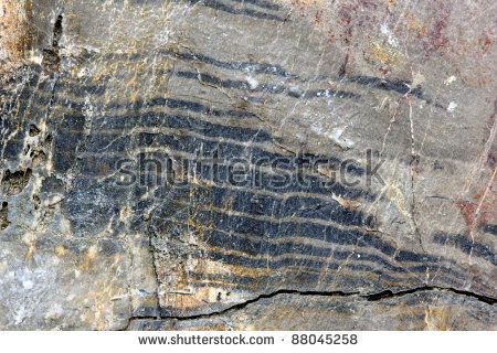 Petrified Tree Trunk Genus Araucarioxylon Upper Stock Photo.