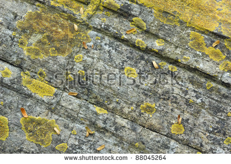 Fossil Growth Rings Petrified Tree Trunk Stock Photo 88045258.