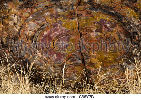 Triassic Stock Photos & Triassic Stock Images.
